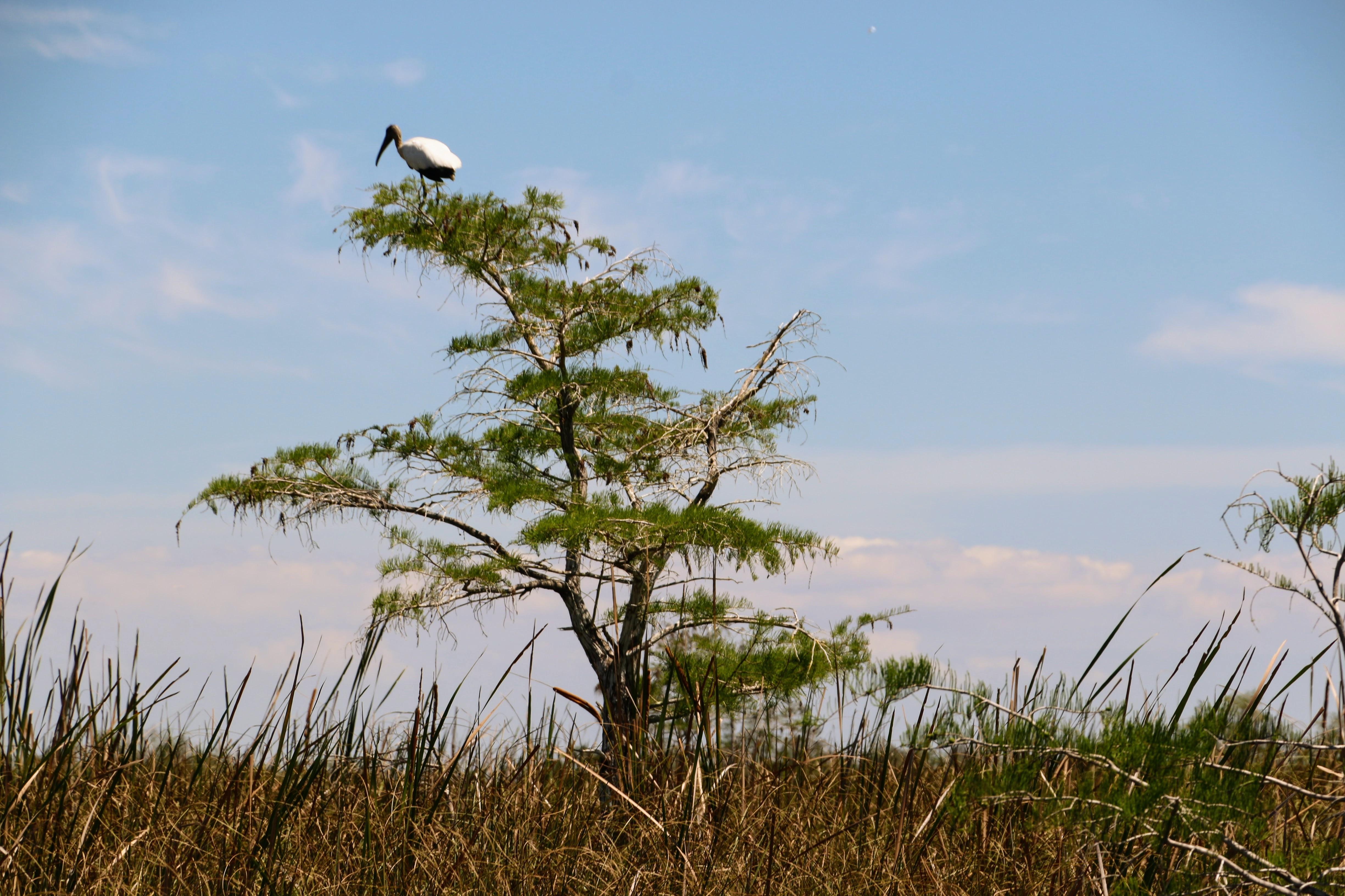 De Everglades bezoeken