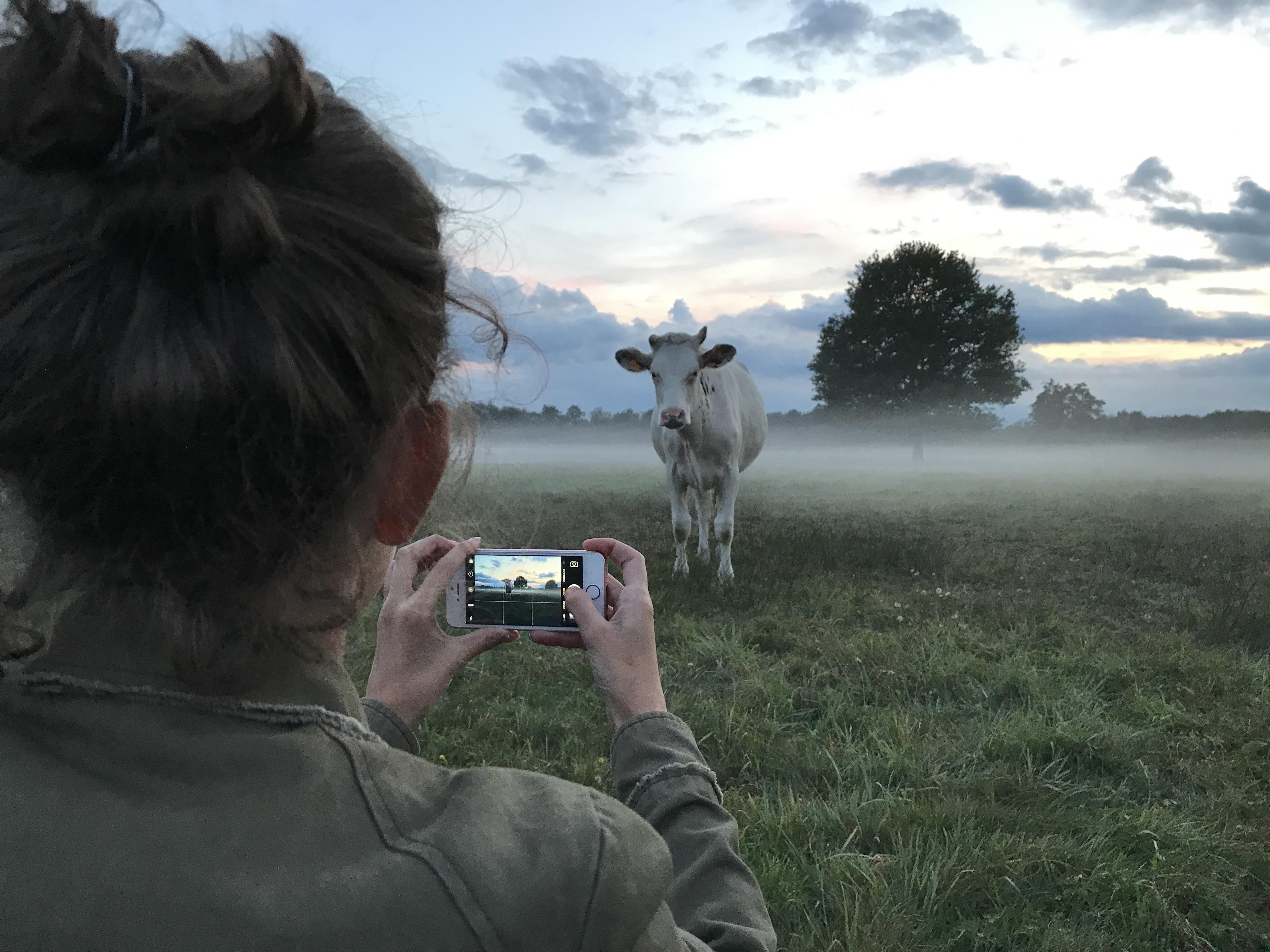 Foto van een koe maken