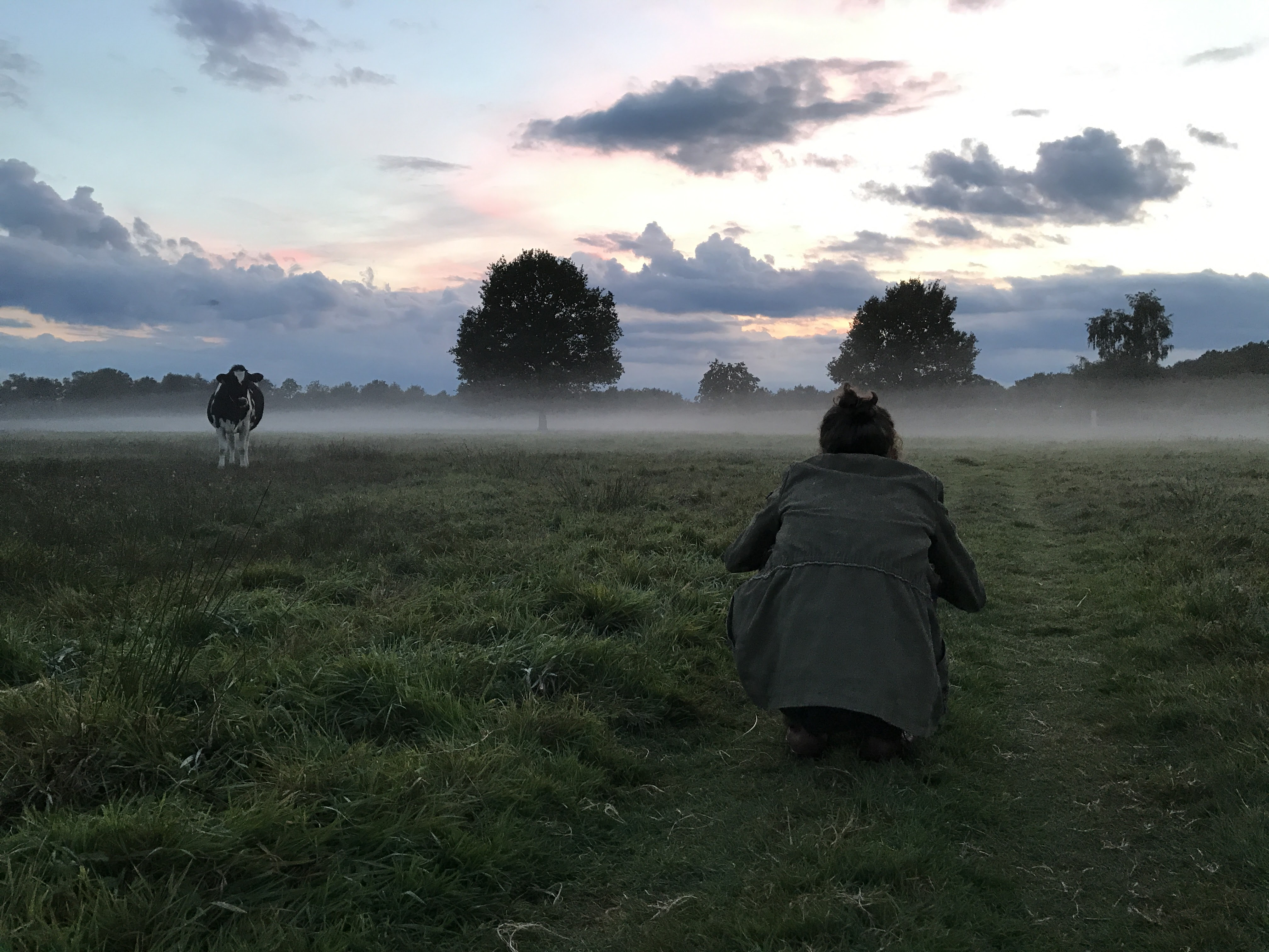 Een veld met mistbank fotograferen
