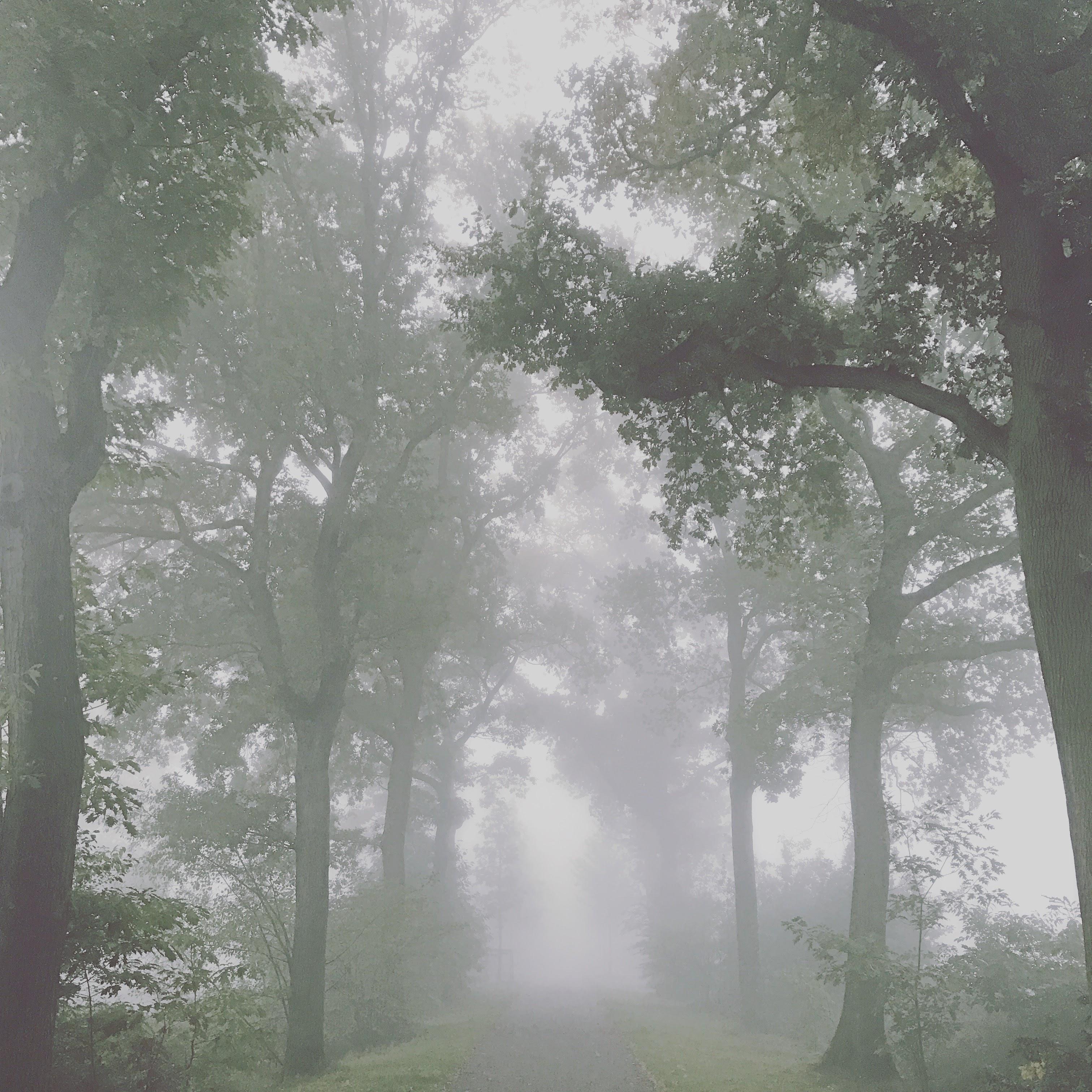 Kiewitdreef in de mist