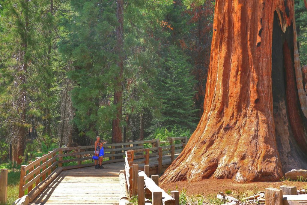 Sequoia National Park bezoeken
