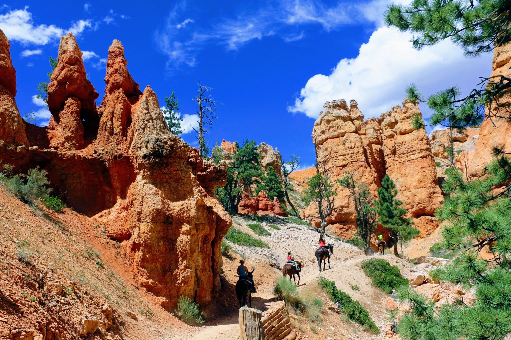 Paardrijden in Canyon