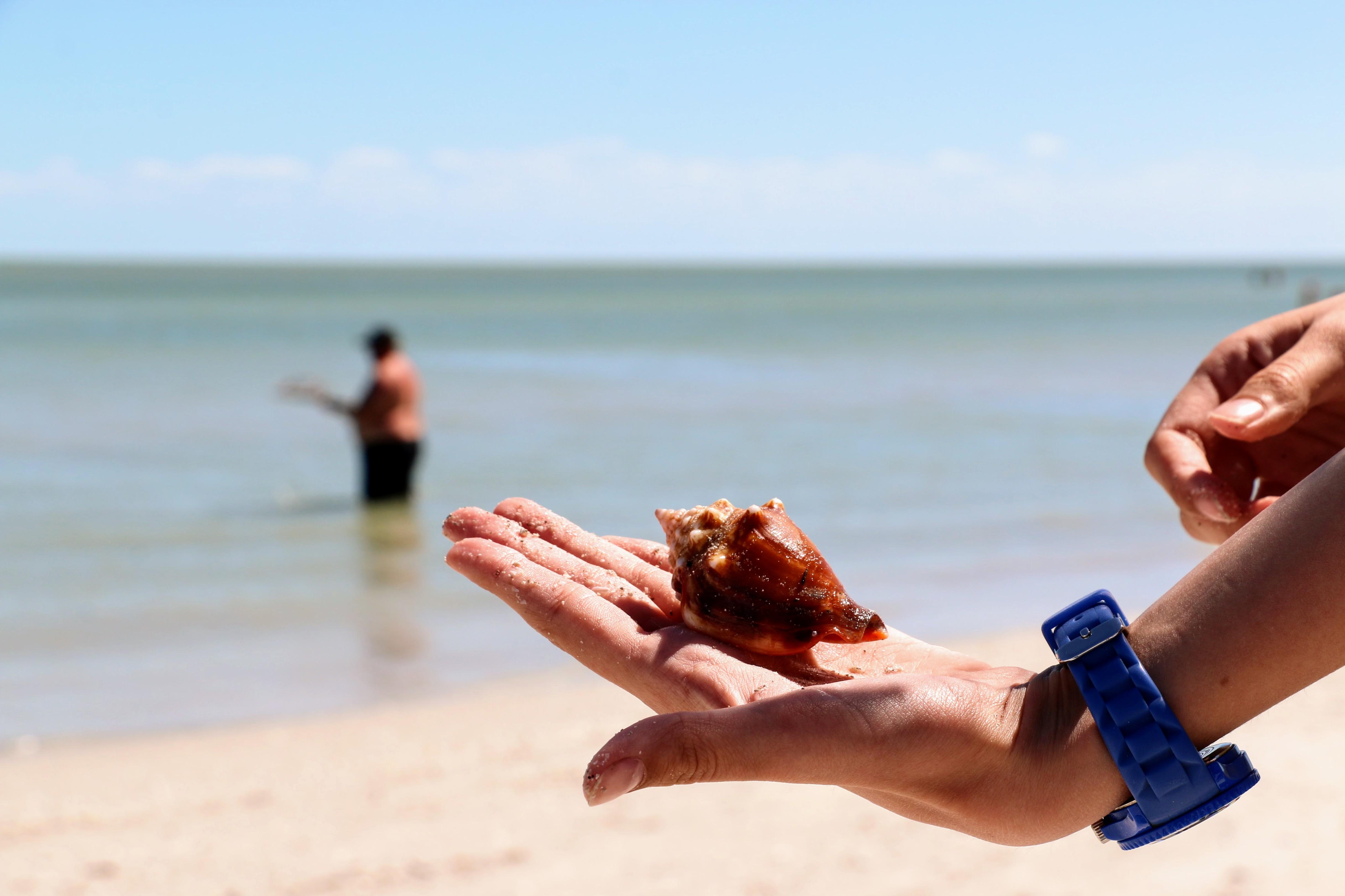Mooie schelpen in Florida