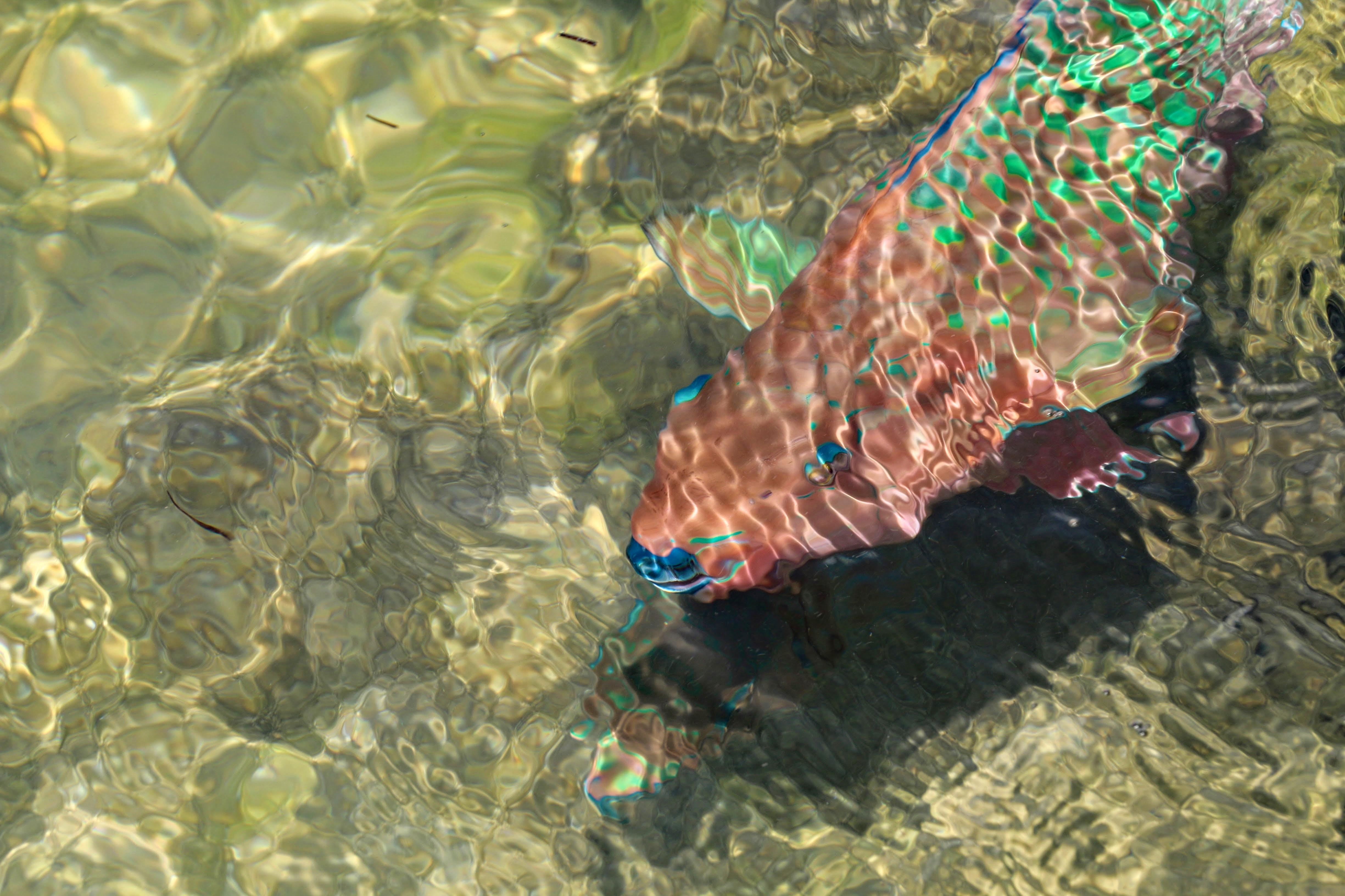 Fel gekleurde vissen in Florida