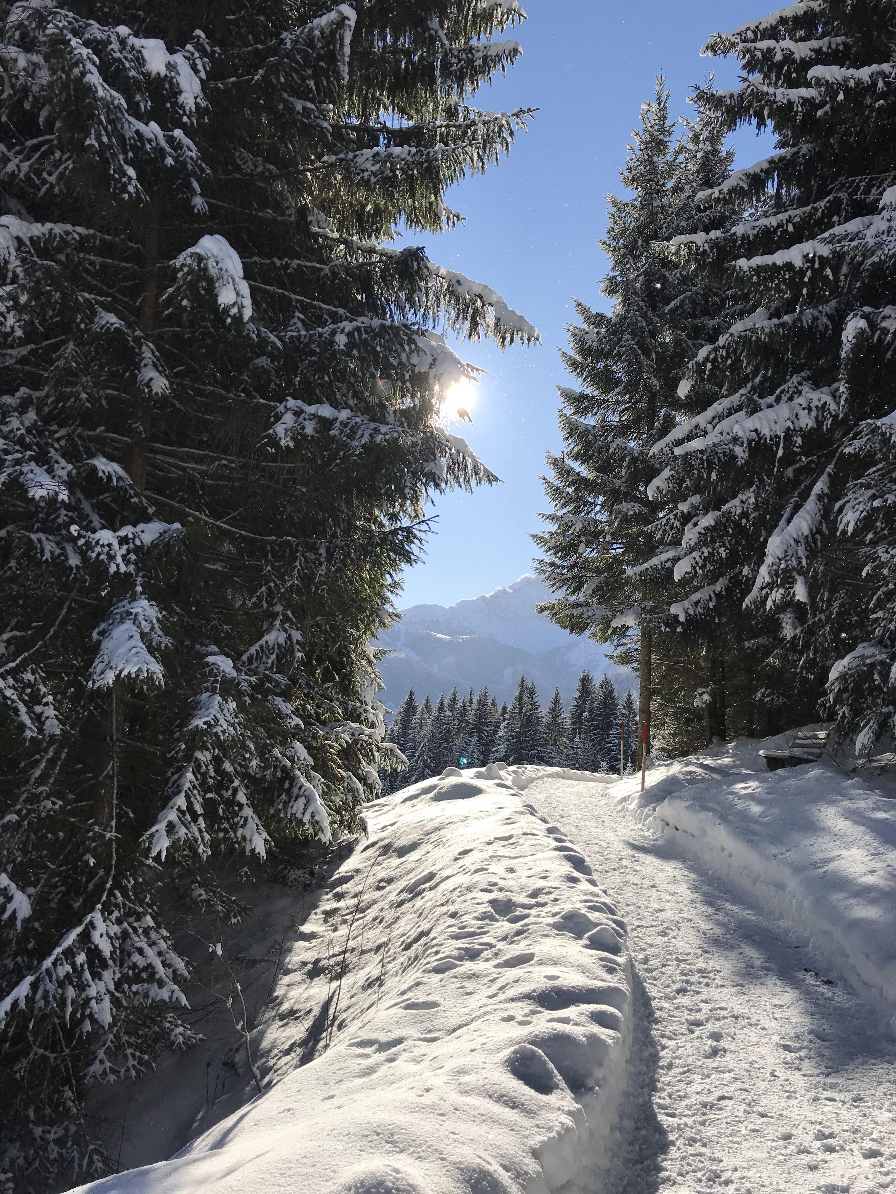 Panoramaweg Ehrwald - Lermoos
