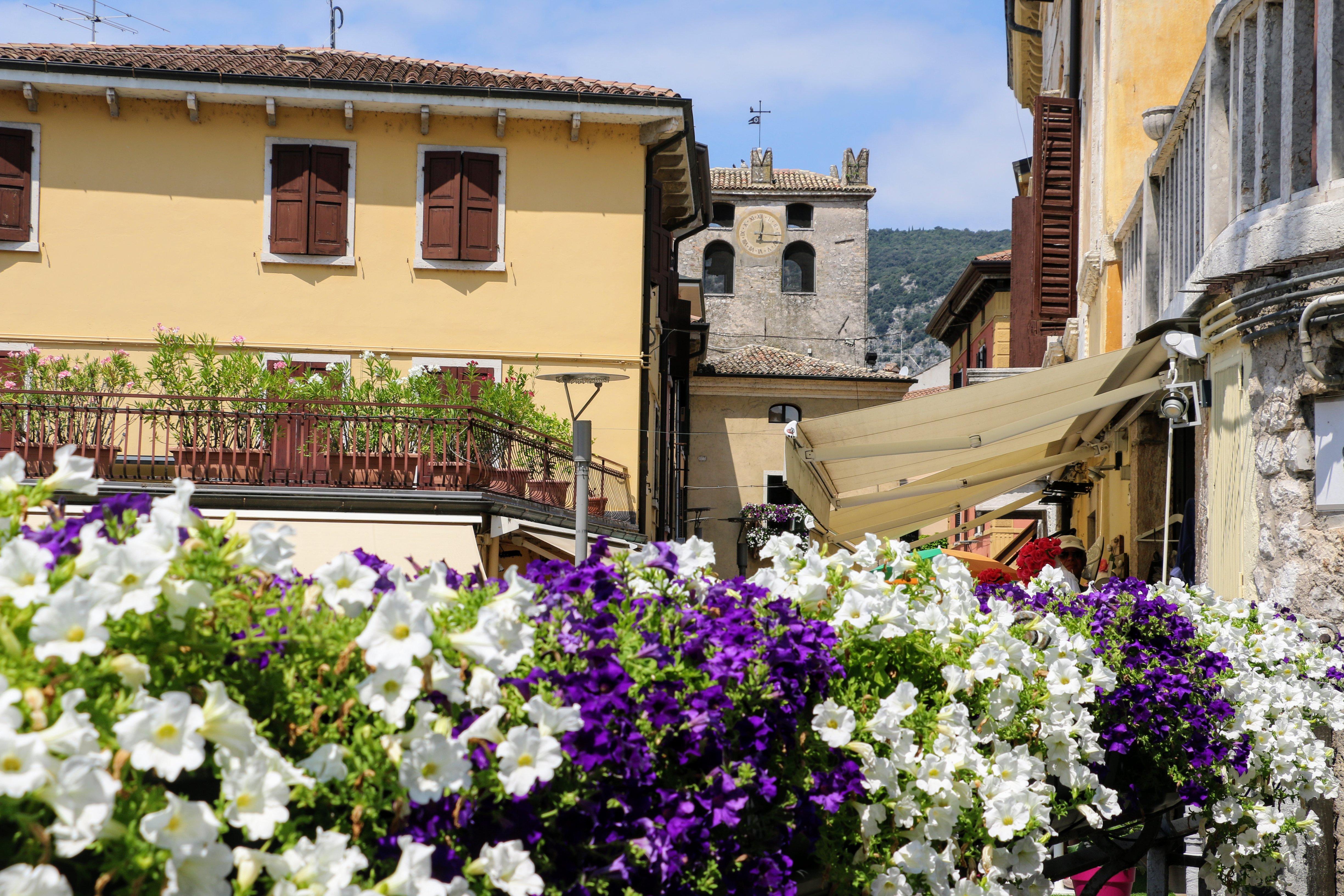 Mooie bloemen in Garda