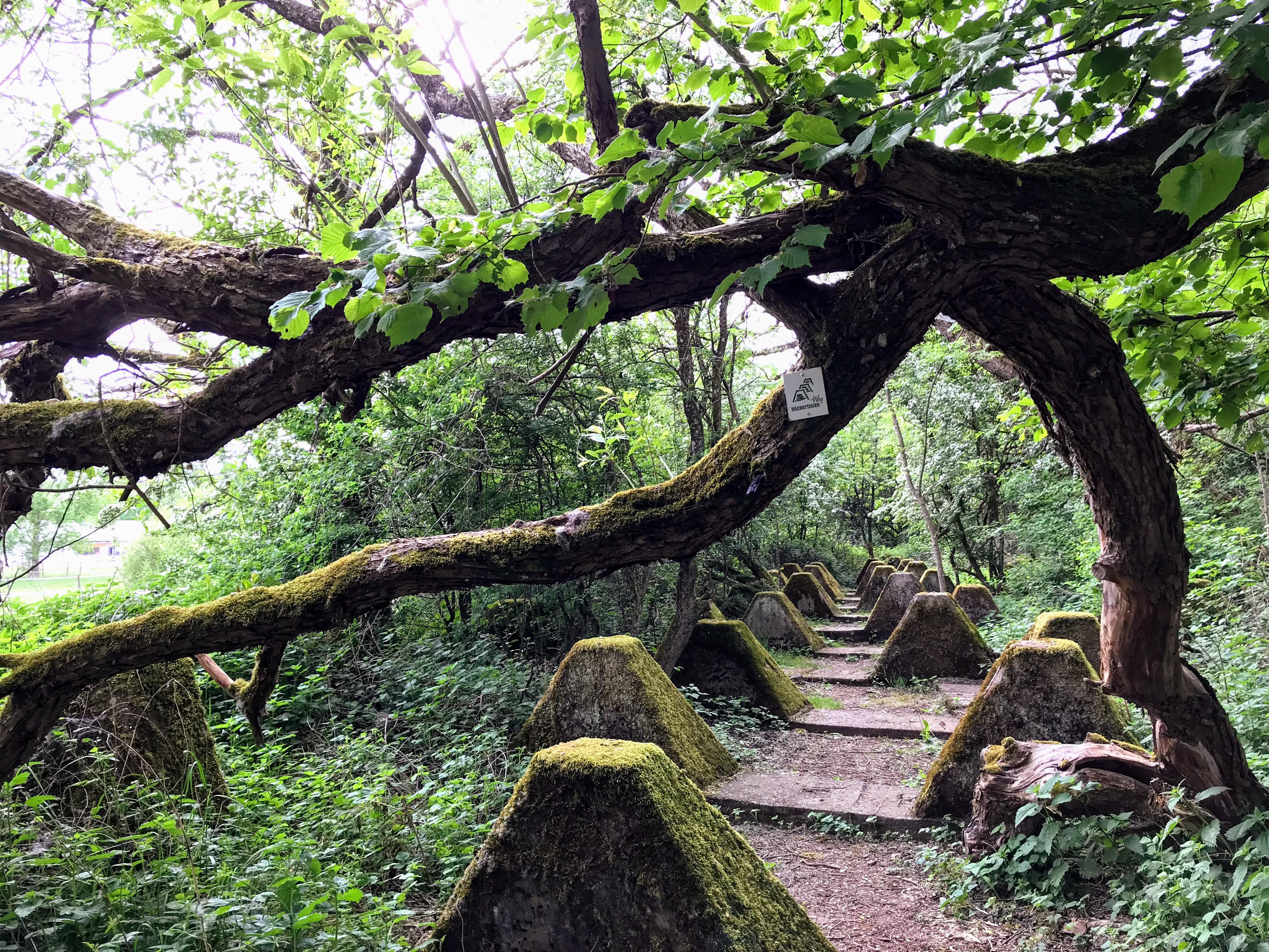 Höckerlinienweg - wandelen tussen de 'drakentanden'