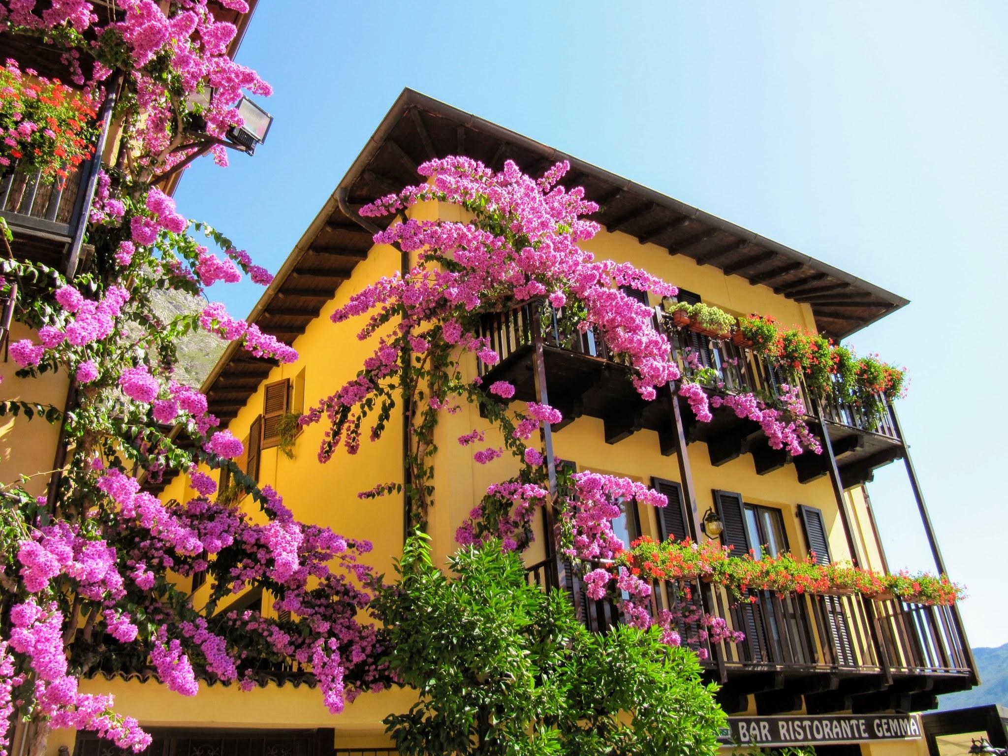 Gekleurde gevels in Limone sul Garda met bougainville