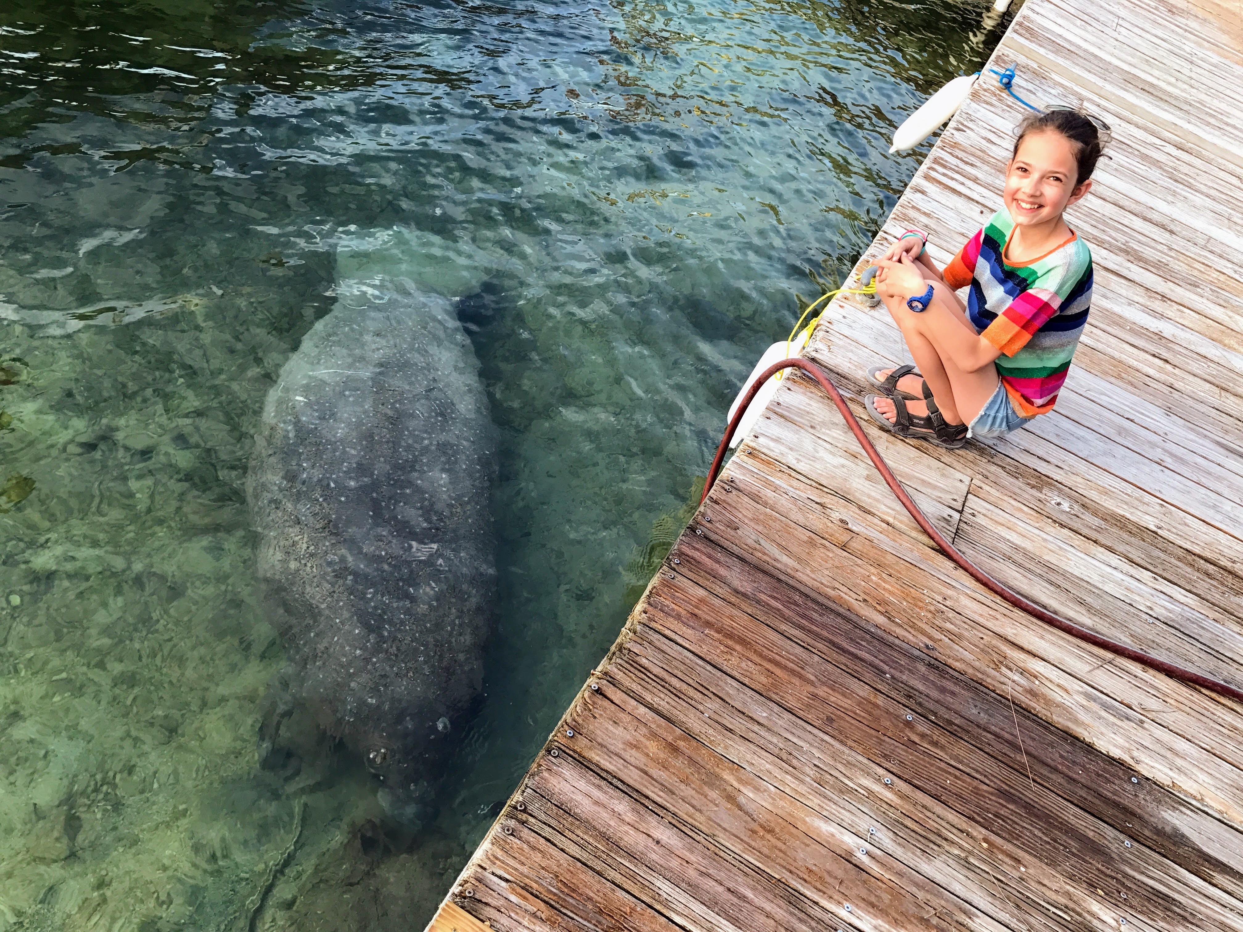 Zeekoeien Florida Islamorada