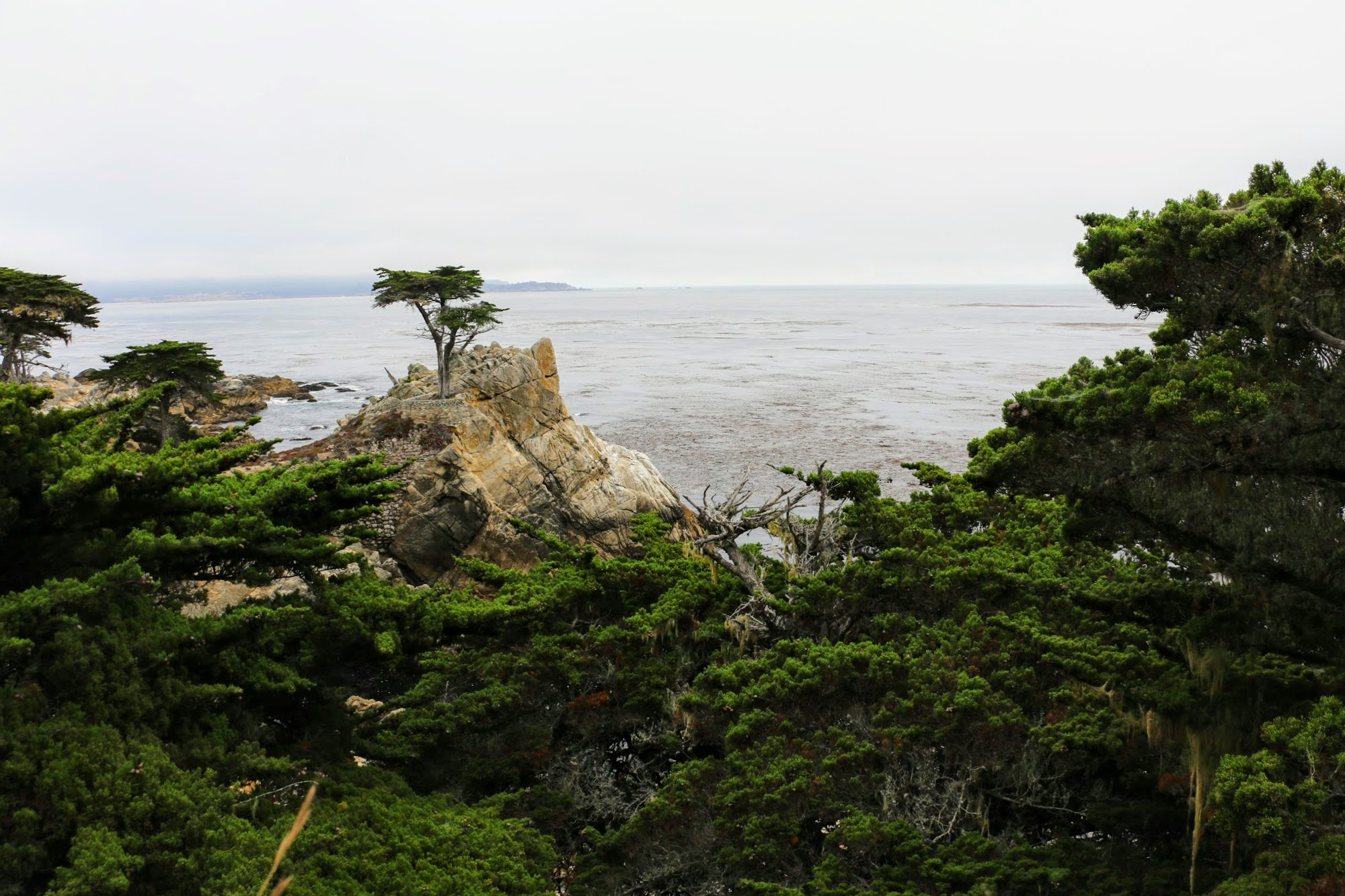 17 mile Drive, Lone Cypress Tree