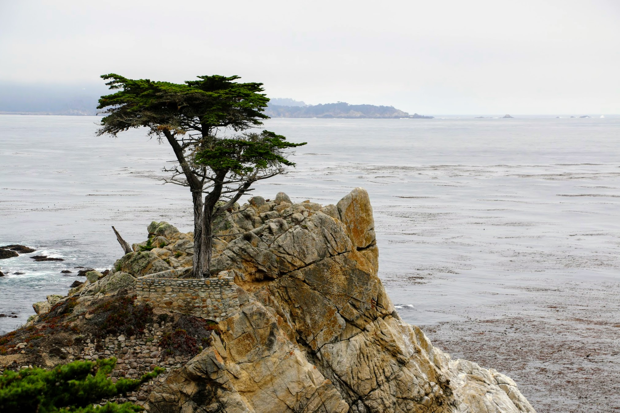 Pebble Beach, Lone Cypress tree