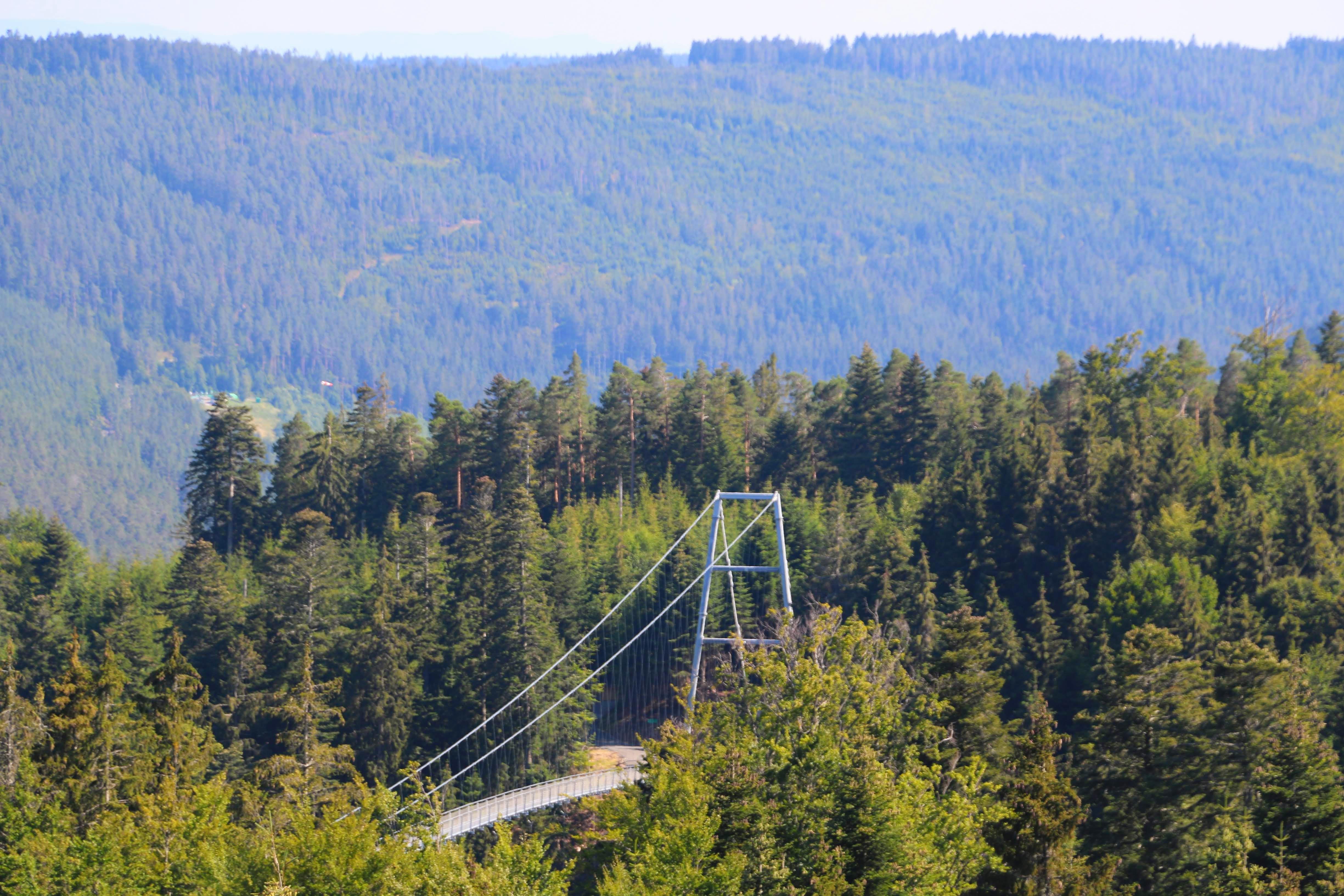 Wildline hangbrug vanaf het boomtoppenpad gezien