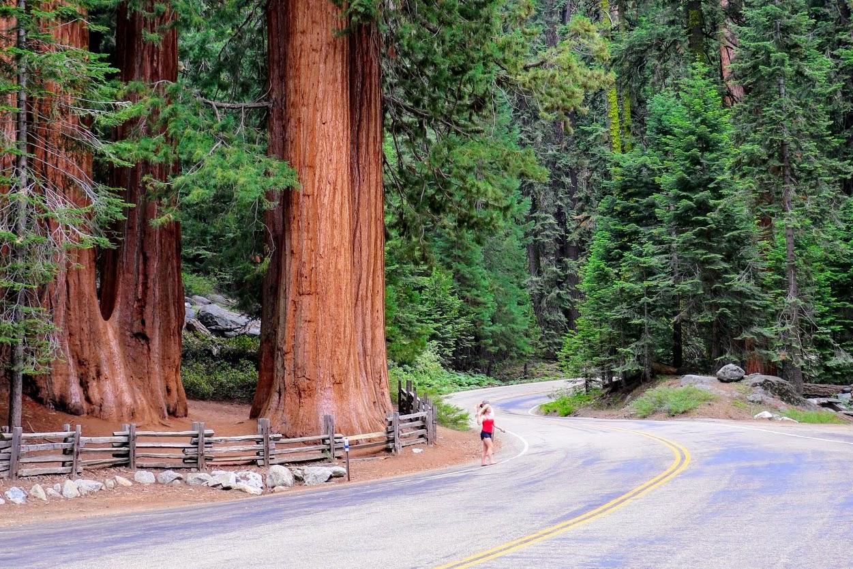 Route door Sequoia National Park