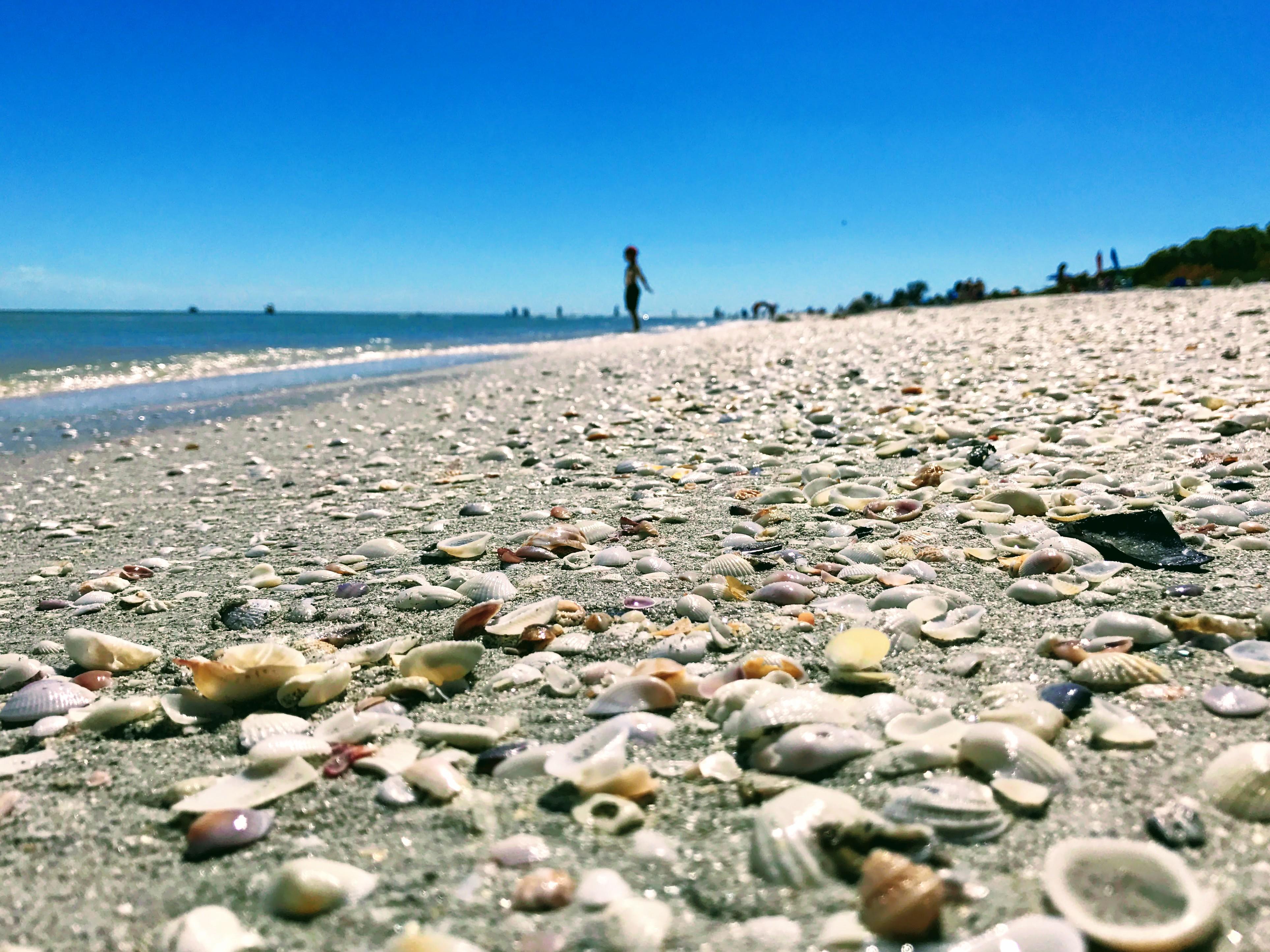 Schelpenstrand Florida
