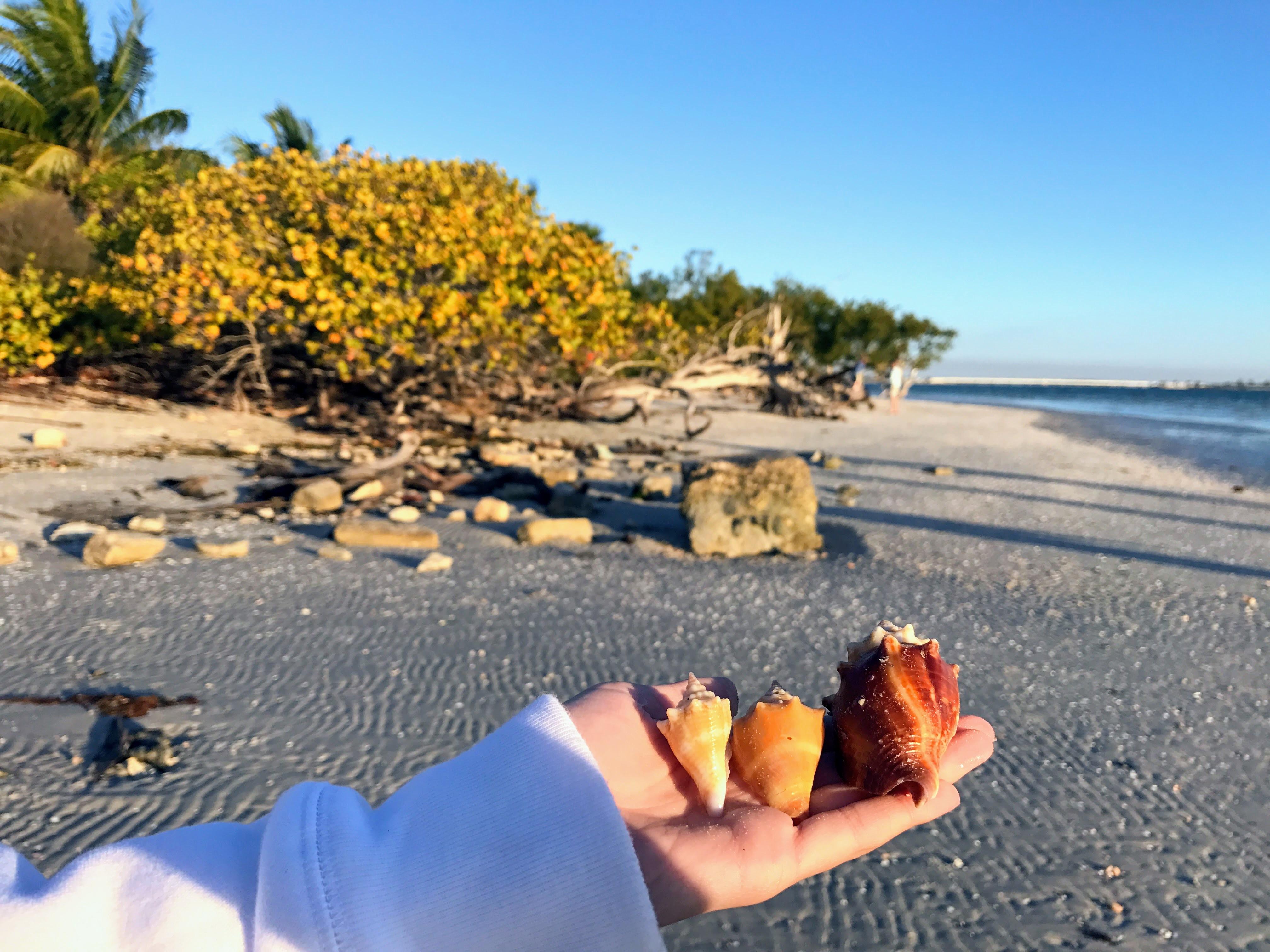 Schelpen strand Sanibel