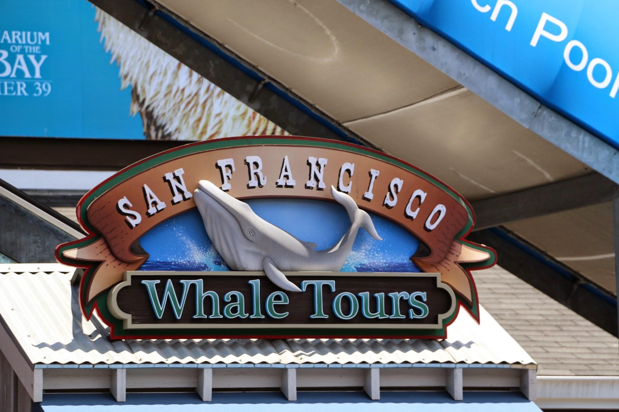 Walvissen zien in San Francisco