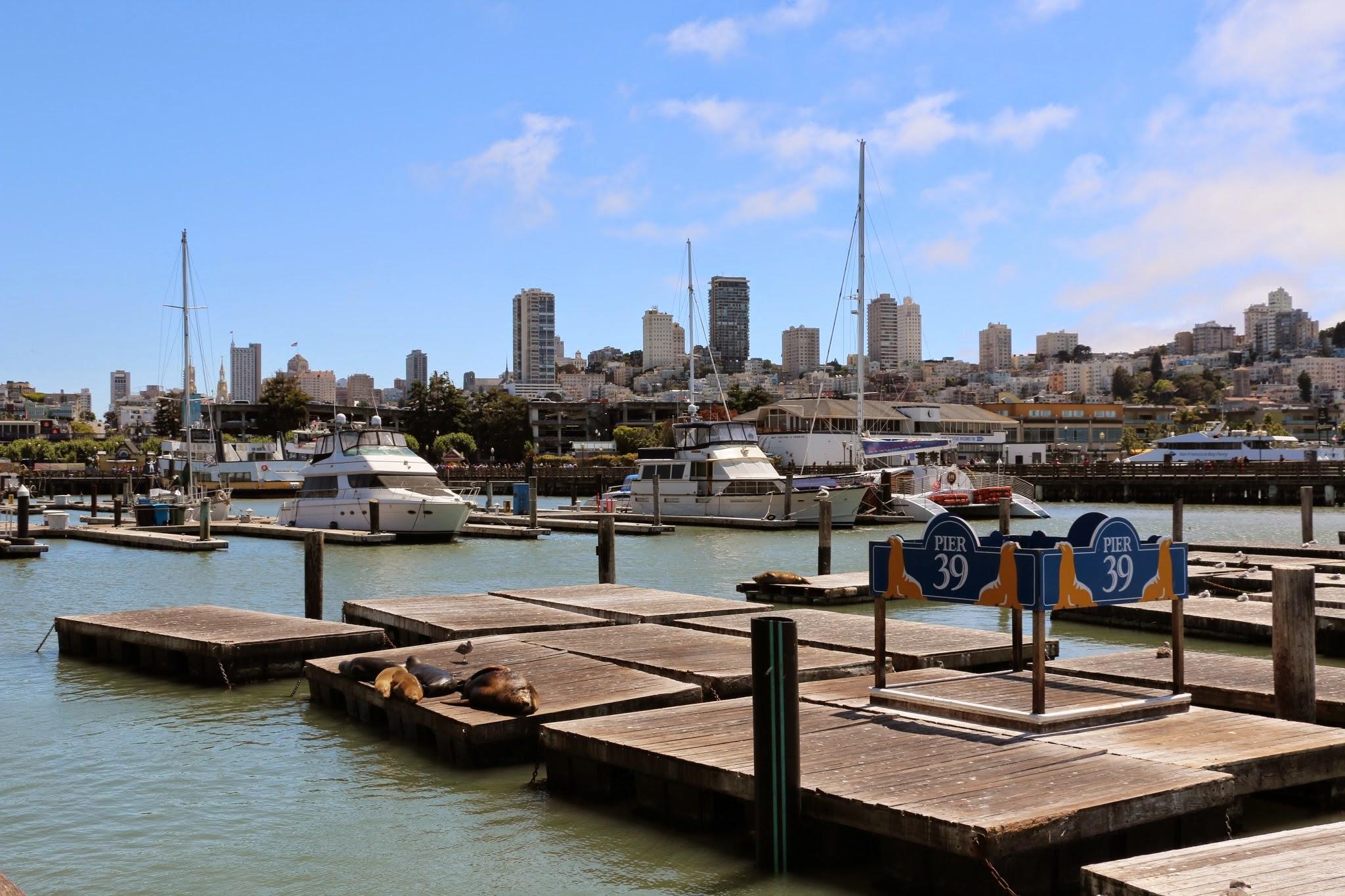 zeeleeuwen die op pontons bij de jachthaven liggen