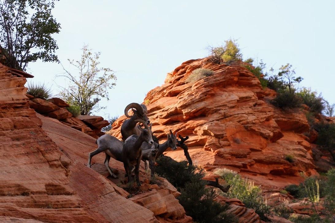 Dieren Zion National Park