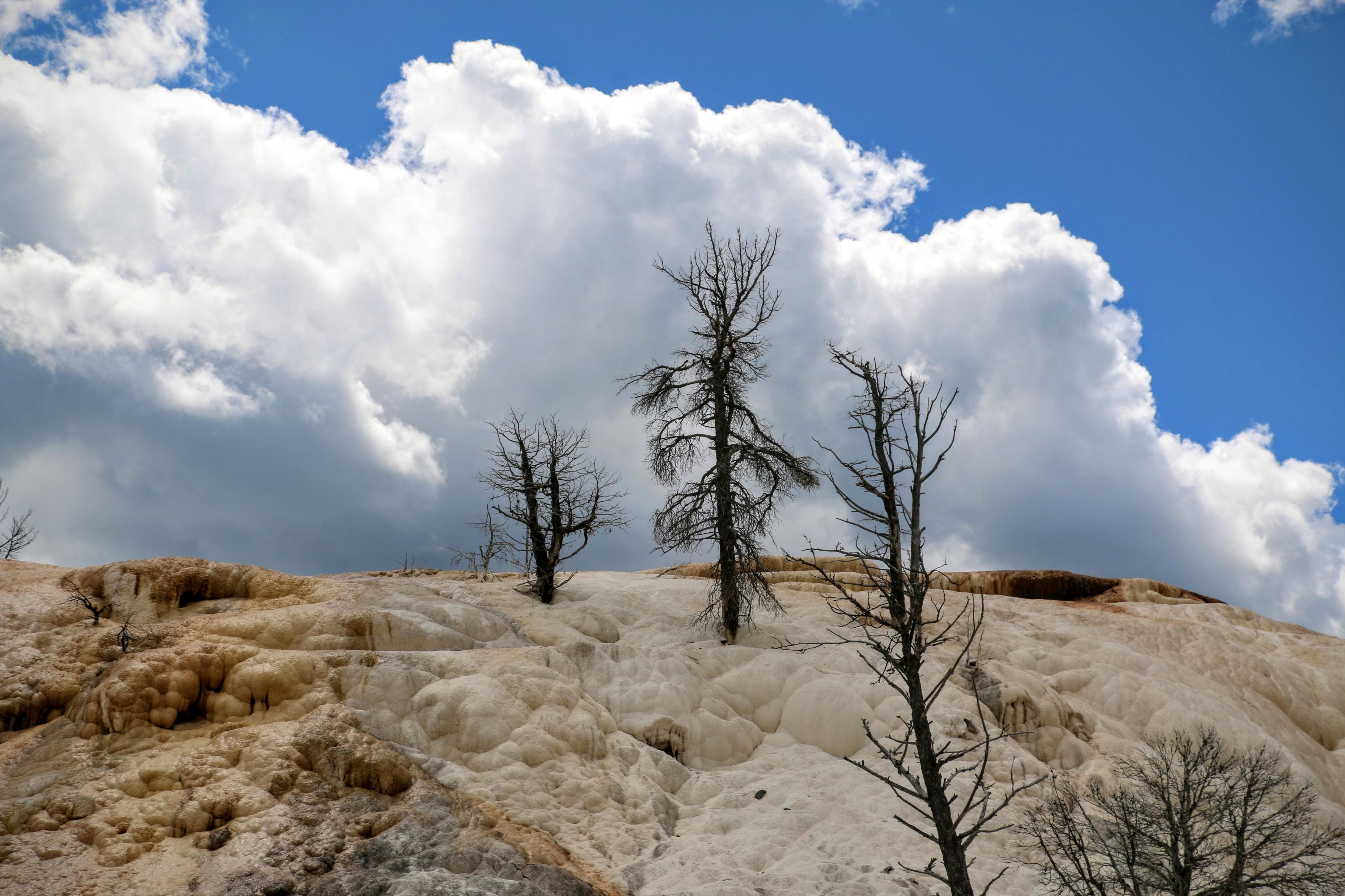 Witte berg in Yellowstone
