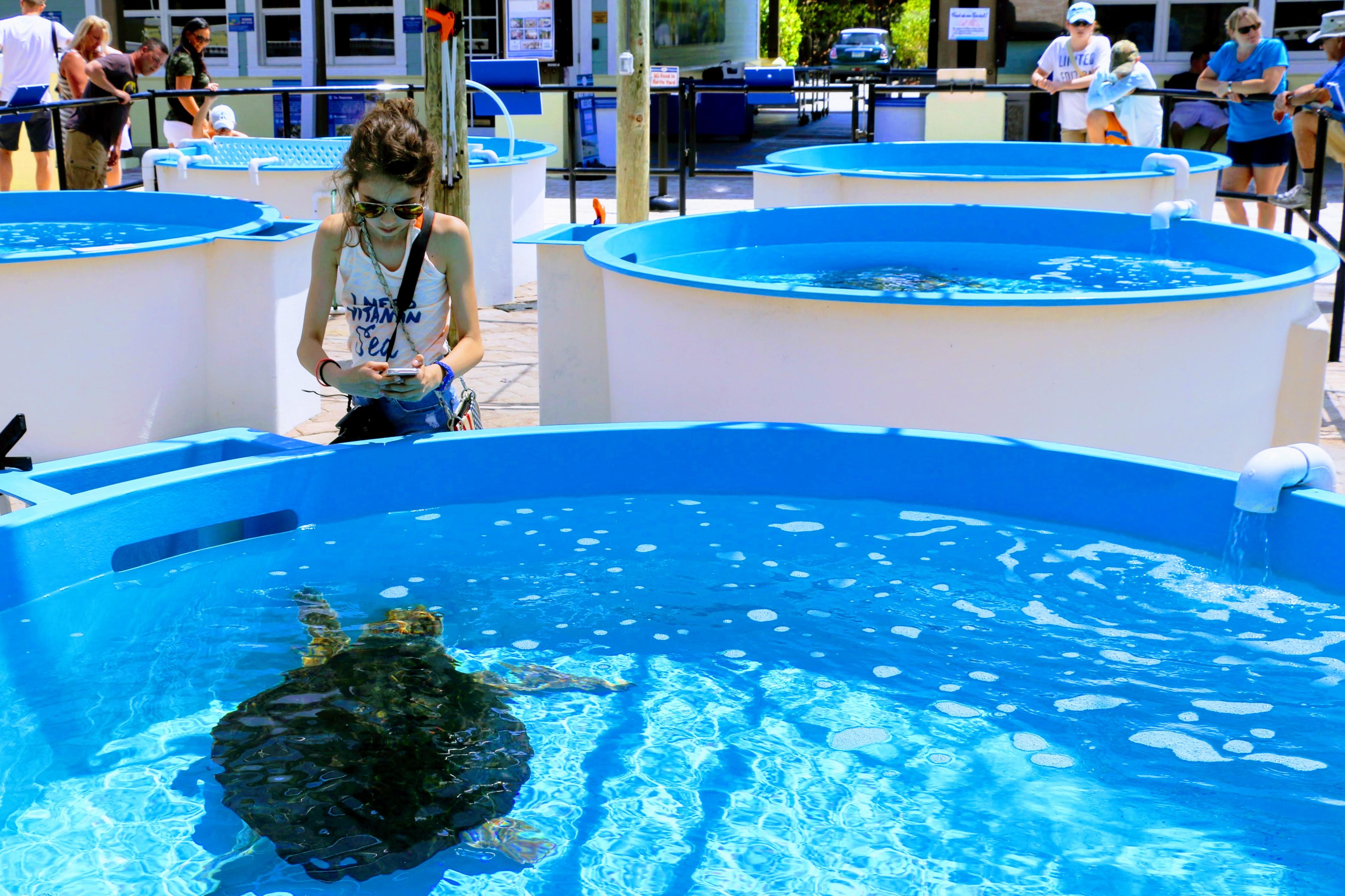 Schildpadden Florida center