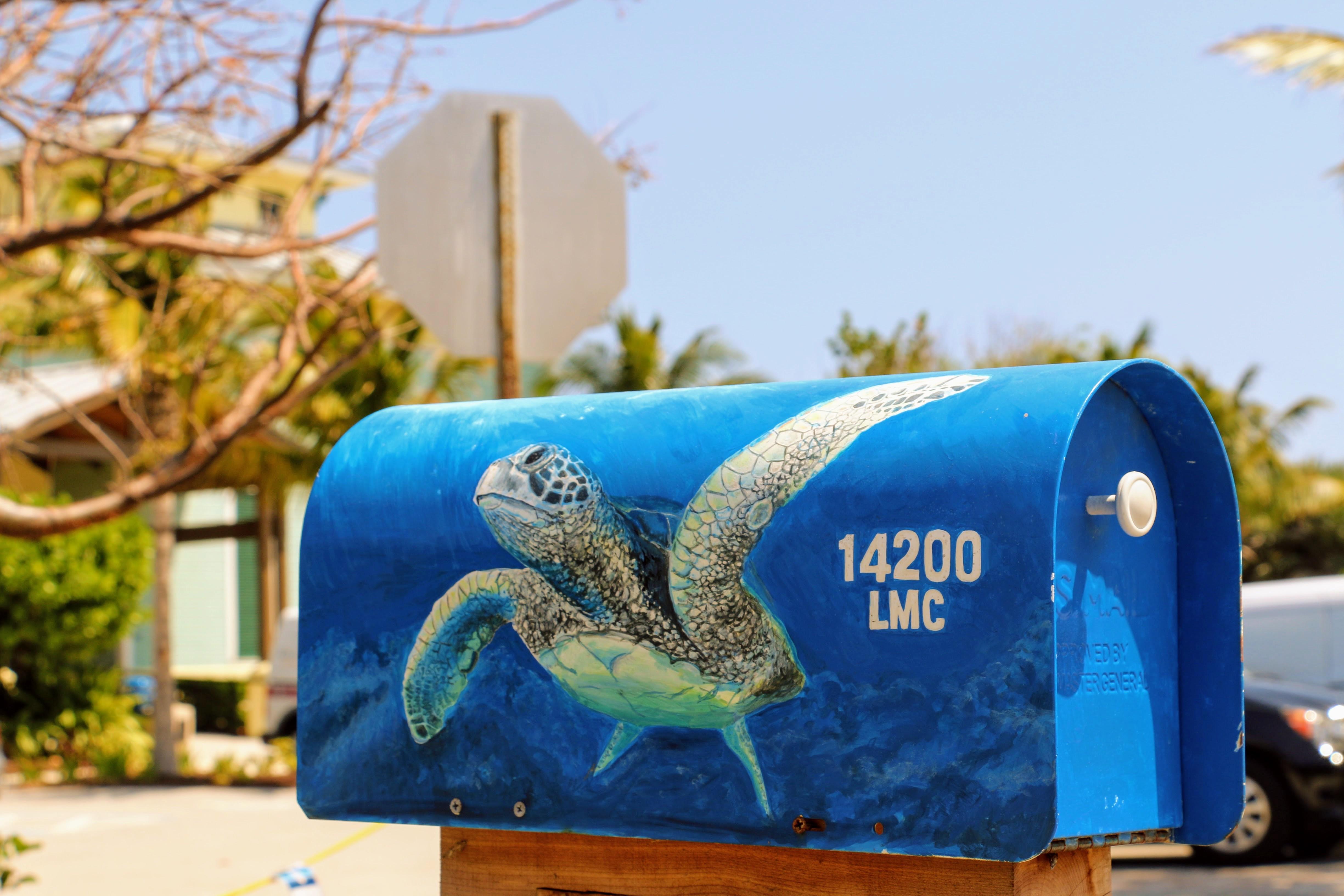Brievenbus Amerika schildpad Loggerhead Marinelife