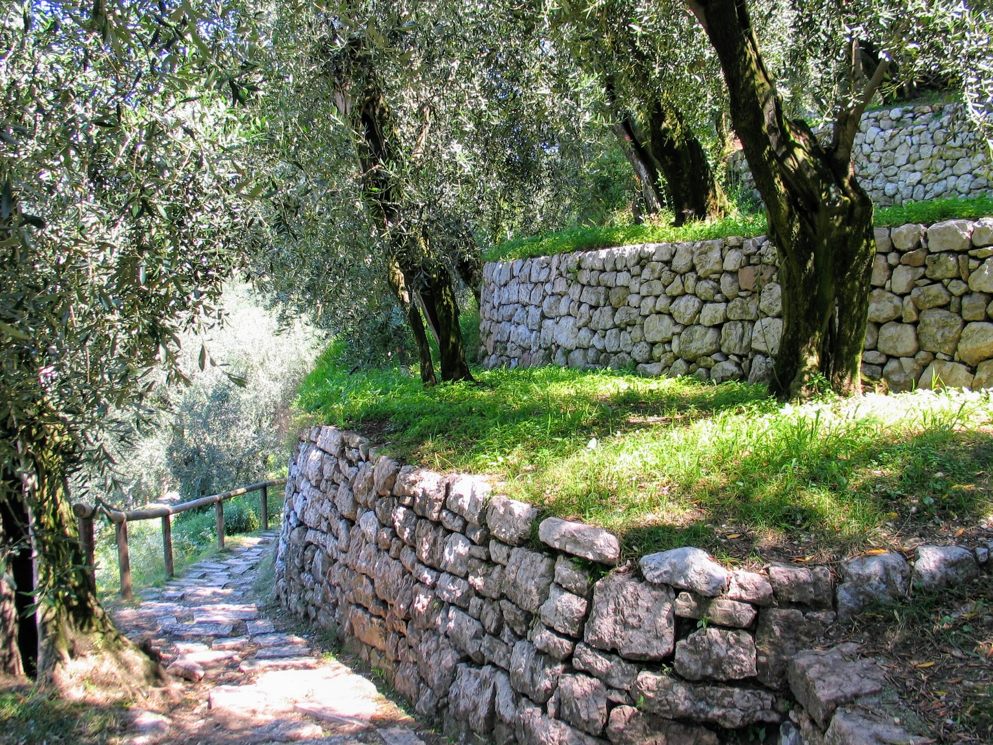 Wandelen tussen de olijfbomen