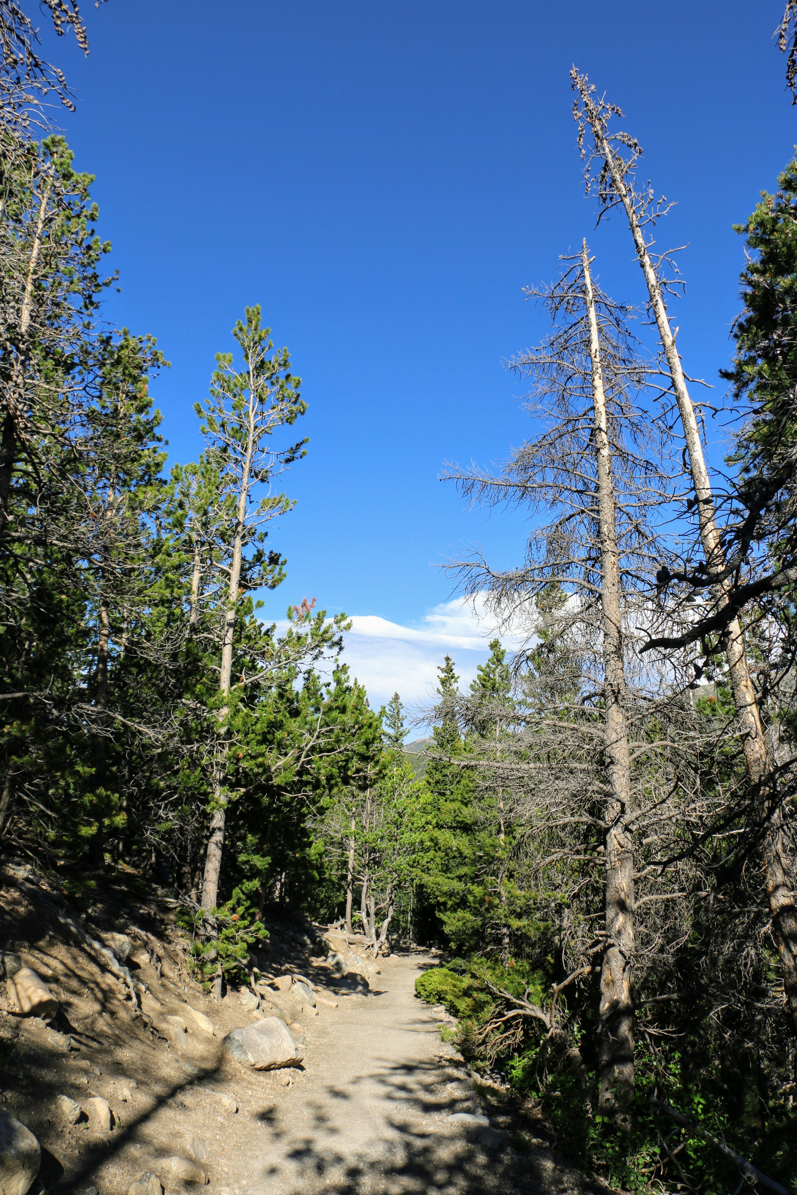 Wandelingen in Rocky Mountain National Park