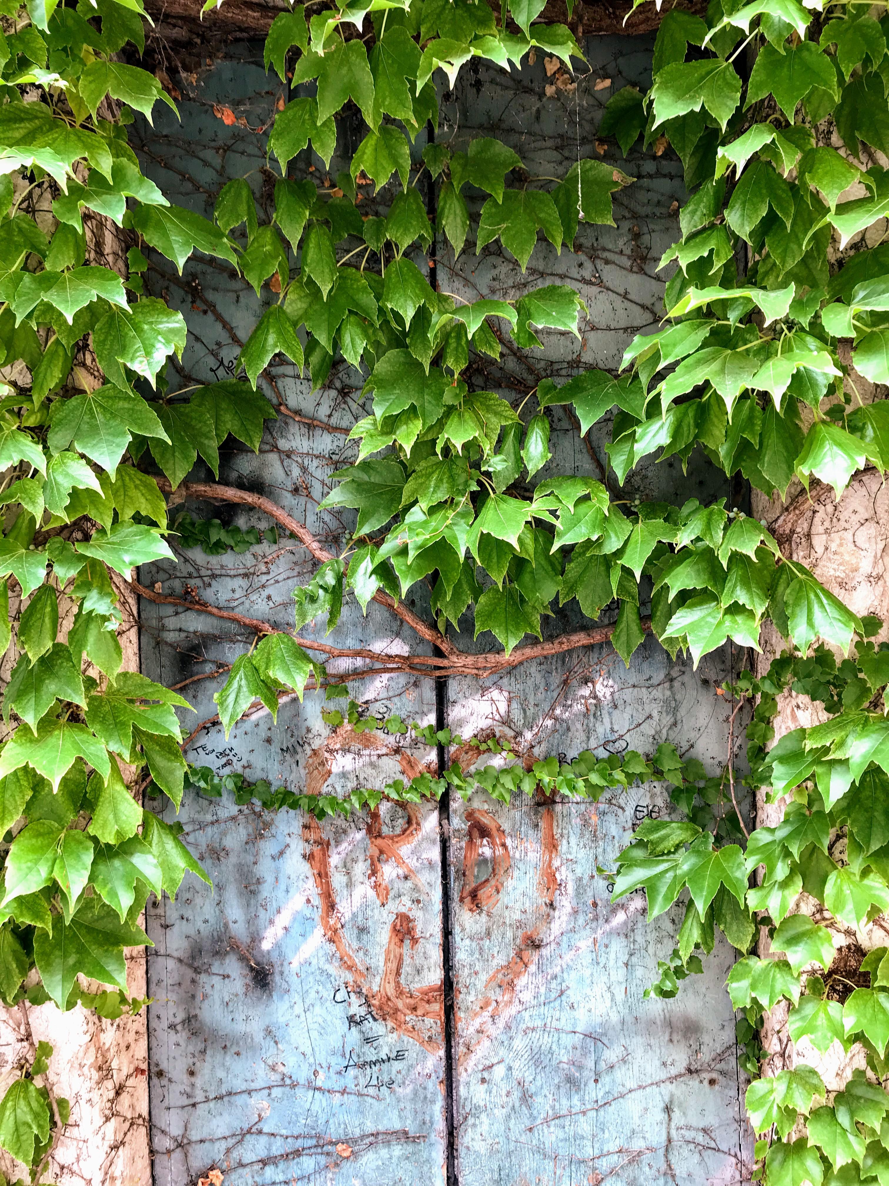 Een oude deur met klimplant