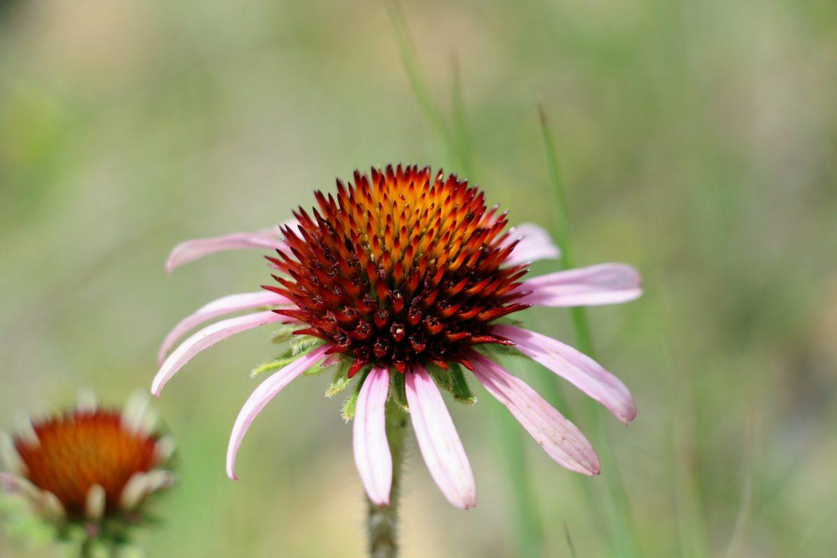 Mooie wildbloemen in Amerika