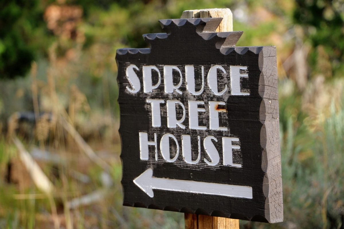Spruce Tree House