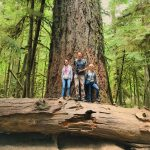 Cathedral Grove – MacMillan Provincial Park
