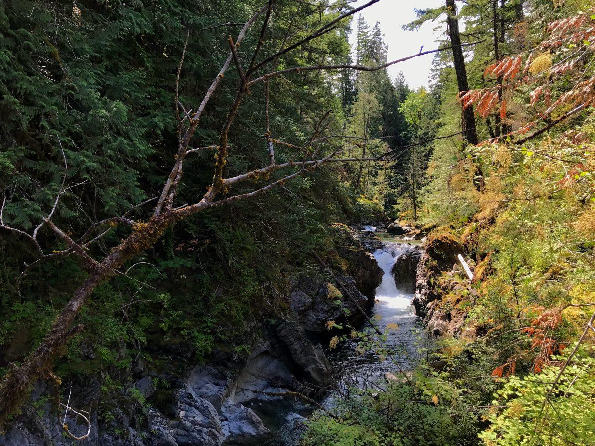 Wandelen in het Little Qualicum Falls Provincial Park