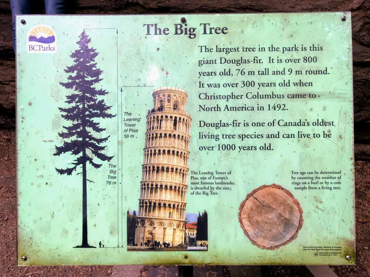The Big Tree - Groter dan de toren van Pisa