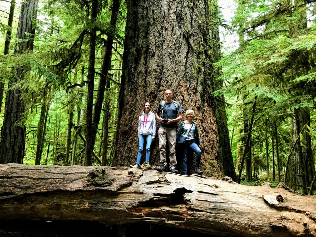 Wandelingen Vancouver Island - Cathedral Grove