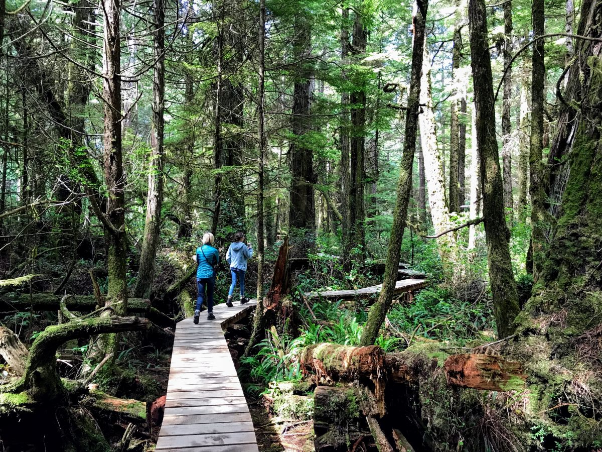 Rain Forest Trail Tofino