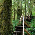 Rainforest Trail Tofino – Loop A