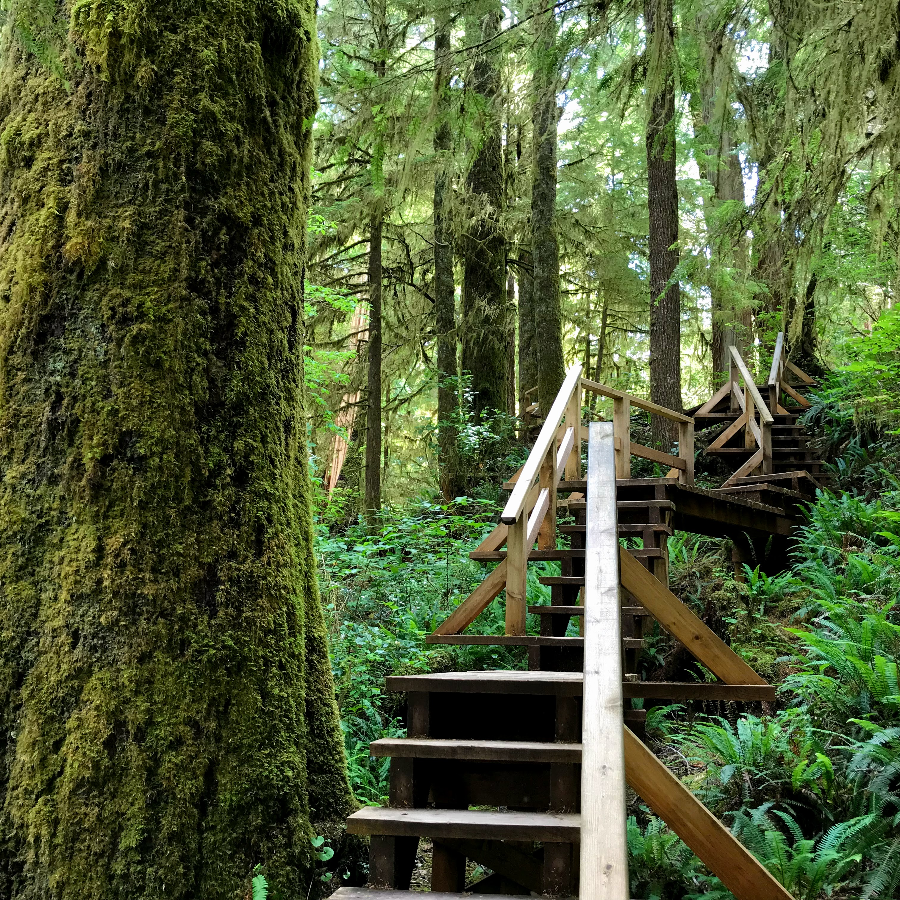 Rainforest Trail Tofino