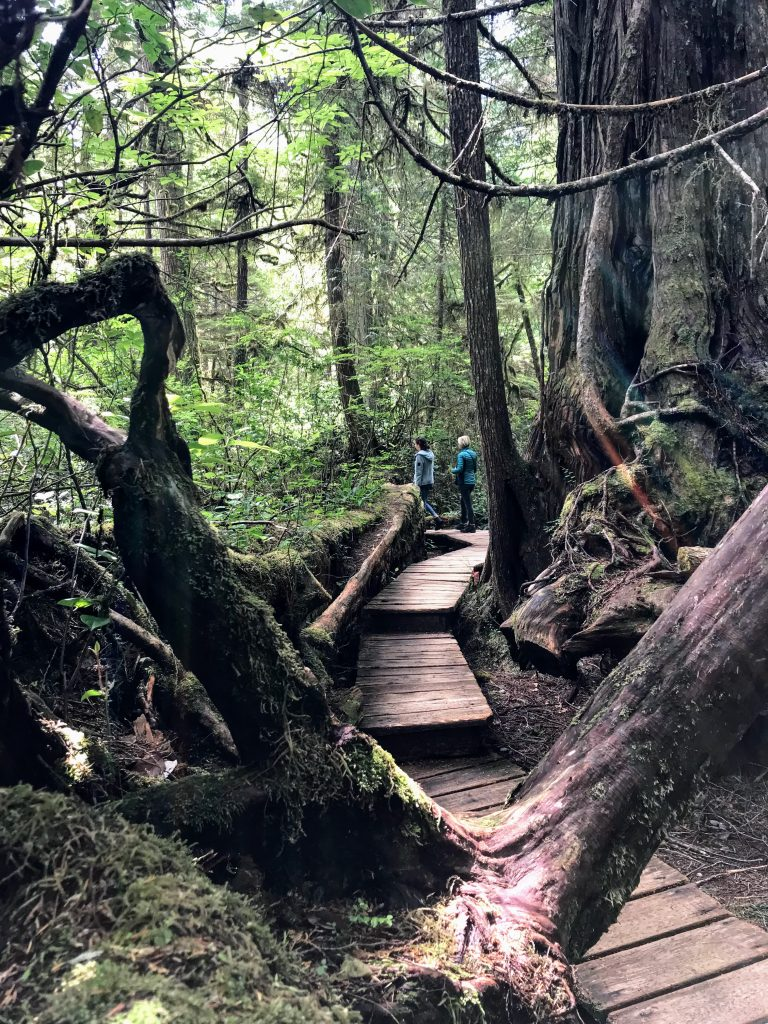Rain Forest Trail in Tofino