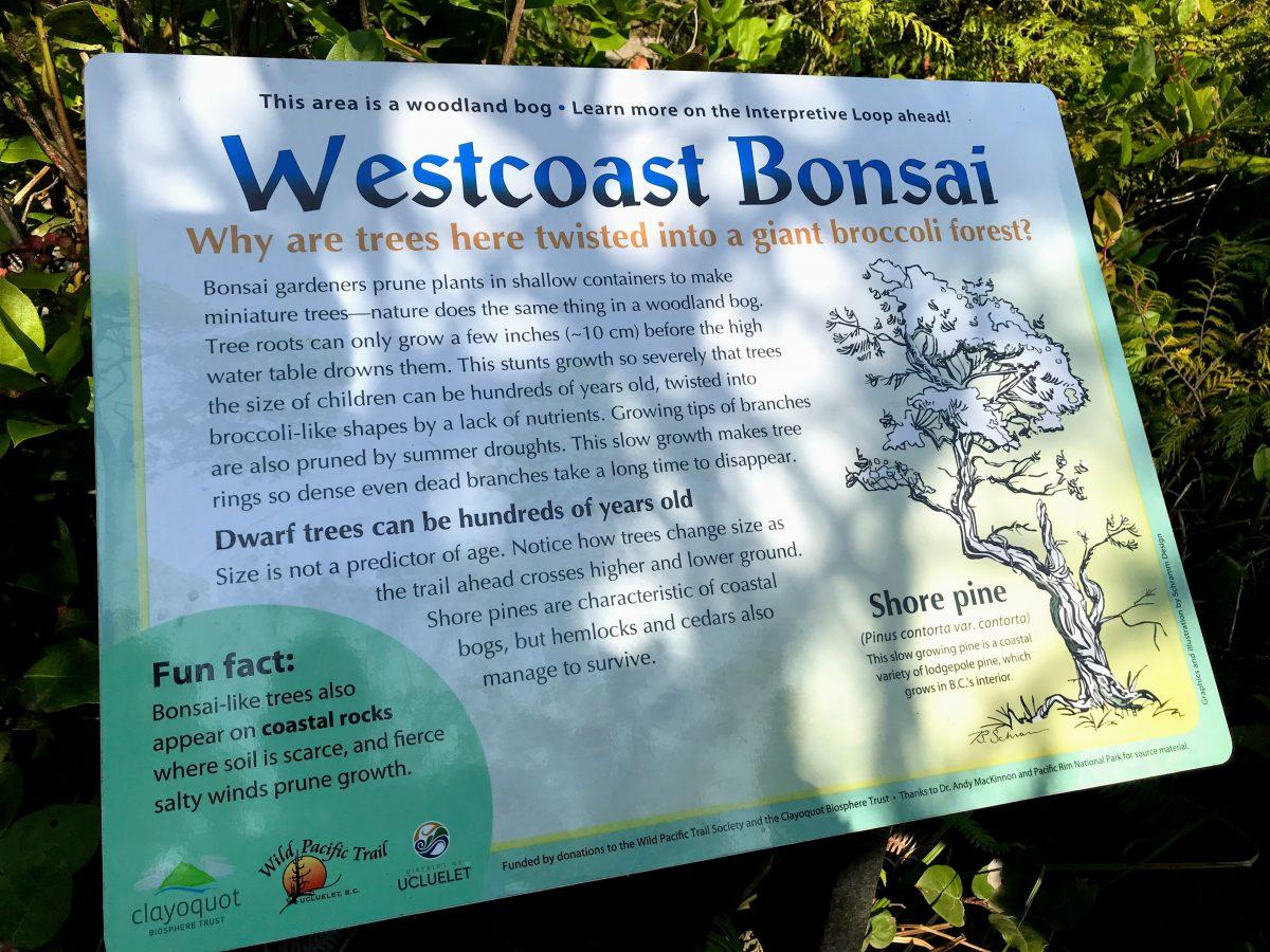 Westcoast Bonsai