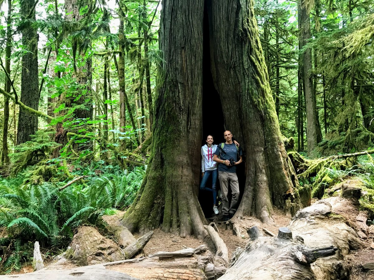 Cathedral Grove Trail Vancouver Island