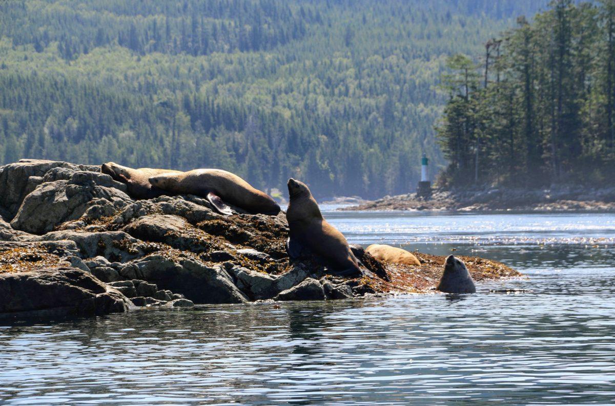 Zeeleeuwen Vancouver Island