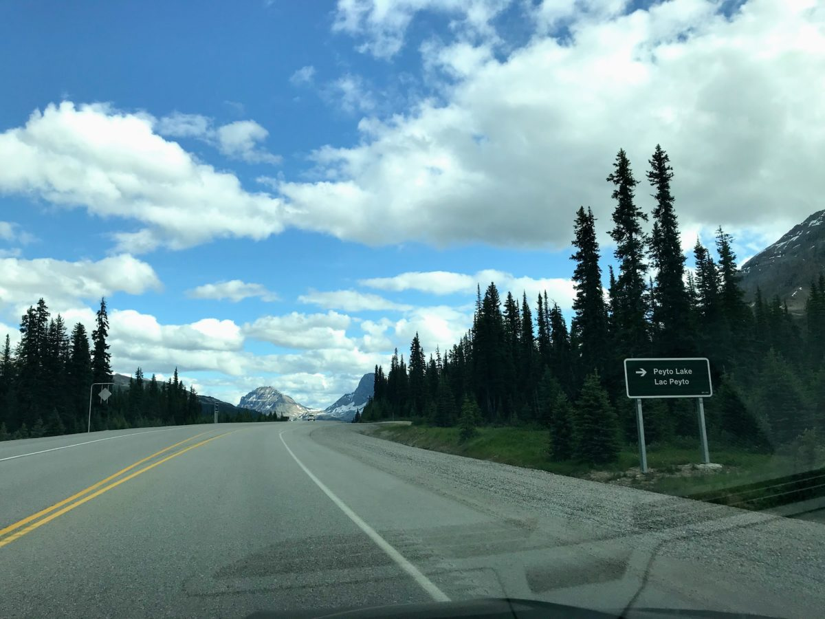 Peyto-Lake-Icefields-Parkway