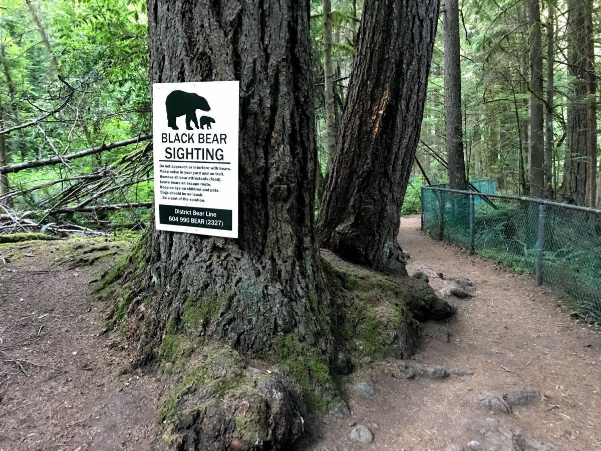 Black Bear Sighting