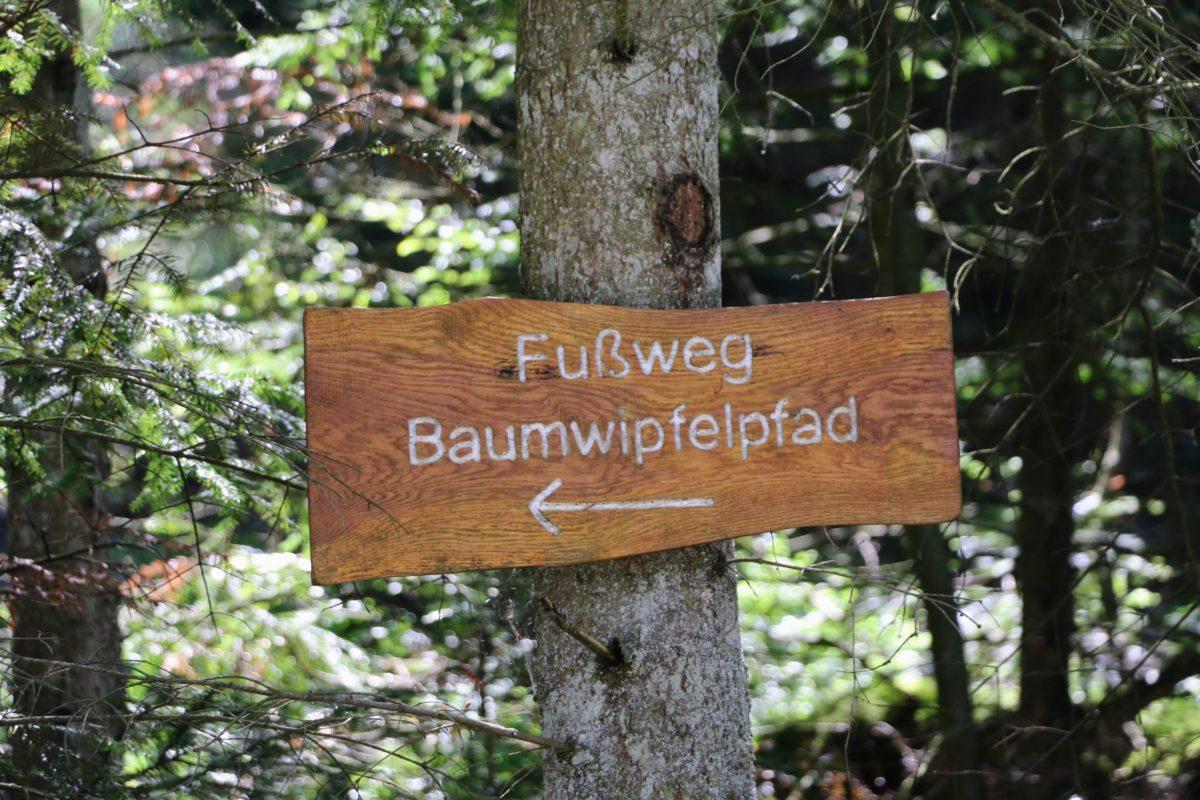 Fussweg Baumwipfelpfad