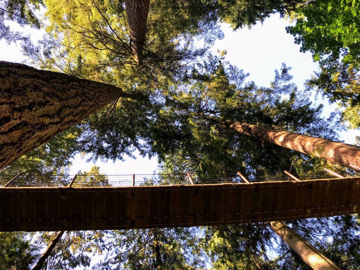 Treetops Adventure - boomtoppenpad in Vancouver