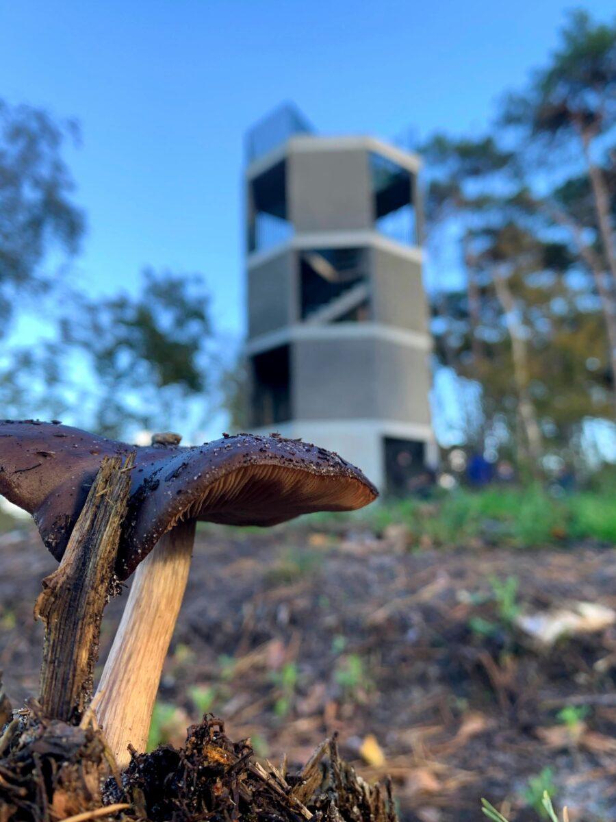 Uitkijktoren de Stapper