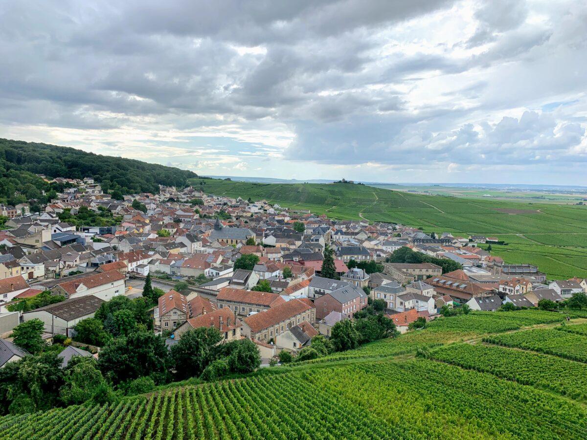 Wijnvelden in de omgeving van Reims